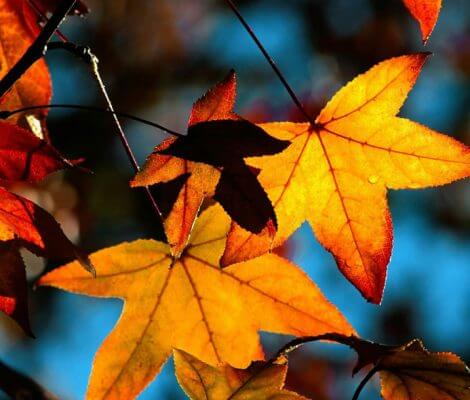 automne thalasso oleron